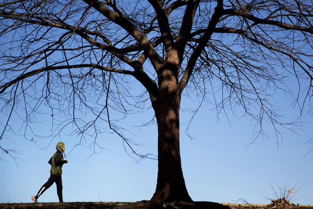A jogger passes a tree while running through Piedmont Park, Friday, Jan. 16, 2015, in Atlanta. Drizzly and foggy weather all week gave way to sunny skies Friday with temperatures expected to reach the low 50s and hover around the mid 50s through the weekend. (AP Photo/David Goldman)