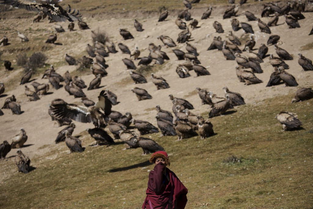 """A Tibetan Buddhist monk protects himself from the smell of decomposing bodies as vultures come from skies for a sky burial near the Larung valley located some 3700 to 4000 metres above the sea level in Sertar county, Garze Tibetan Autonomous Prefecture, Sichuan province, China October 31, 2015. In early afternoons, on a hill near famous Larung Wuming Buddhist Institute relatives and onlookers gather for sky burials in which bodies of deceased people are offered to vultures to prey upon it. Such burials are practiced by some Tibetans and Mongolian in China as an extreme type of Buddhist's """"self-sacrifice almsgiving"""". It is believed that feeding vultures with decomposed corpse of relatives on top of a mountain is a respectful to pay tribute to their passed-away beloved ones. Picture taken October 31, 2015. REUTERS/Damir Sagolj"""