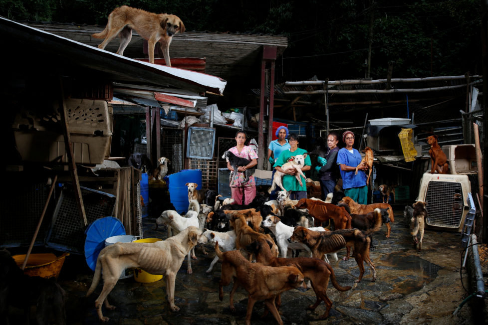 "(L-R) Maria Silva, Milena Cortes, Maria Arteaga, Jackeline Bastidas and Gissy Abello pose for a picture at the Famproa dogs shelter where they work, in Los Teques, Venezuela, August 25, 2016. REUTERS/Carlos Garcia Rawlins       SEARCH ""DOG LIFE"" FOR THIS STORY. SEARCH ""WIDER IMAGE"" FOR ALL STORIES.      TPX IMAGES OF THE DAY  - RTX2OI5B"
