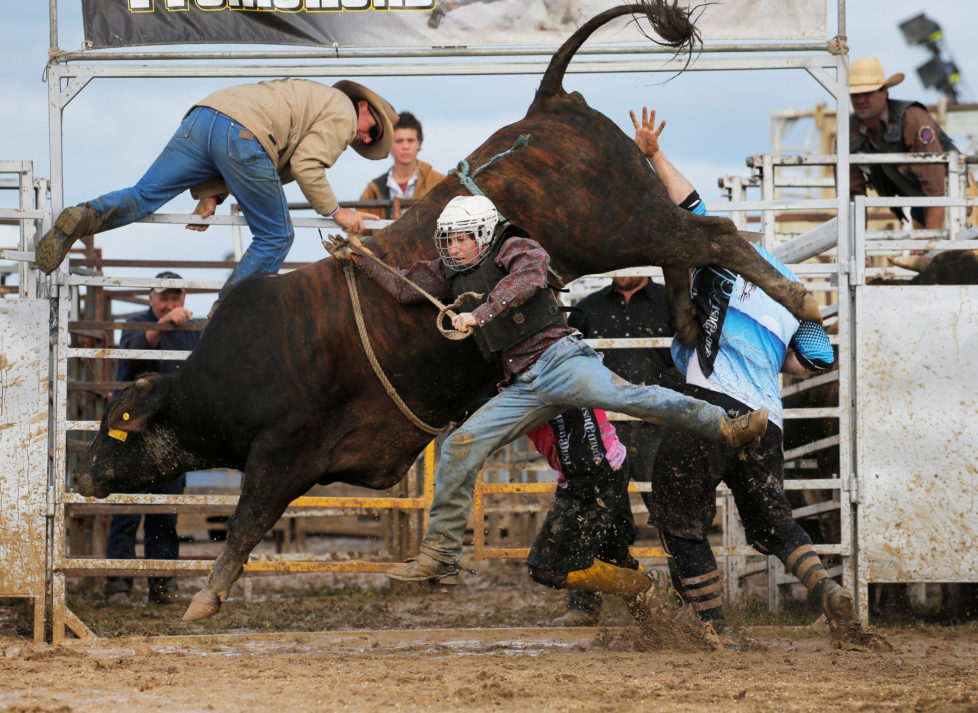 """Bull rider Sam Woodall from Heywood in the Australian state of Victoria is thrown off a bull during competition at the Deni Ute Muster in Deniliquin, New South Wales, October 1, 2016. REUTERS/Jason Reed SEARCH """"UTE CULTURE"""" FOR THIS STORY. SEARCH """"THE WIDER IMAGE"""" FOR ALL STORIES."""